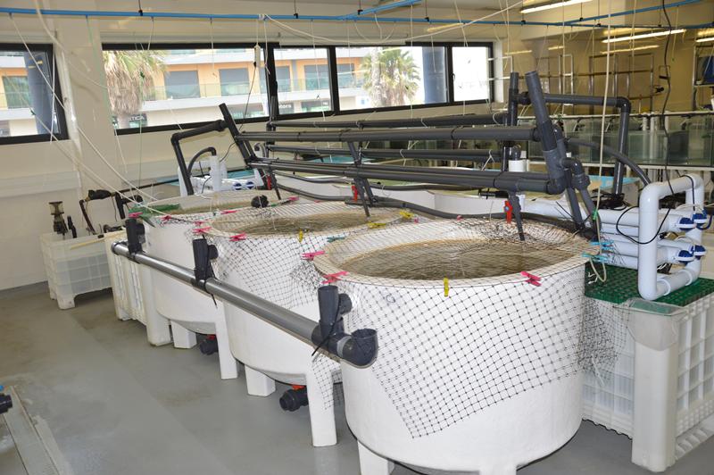 Laboratório de Aquacultura no Cetemares