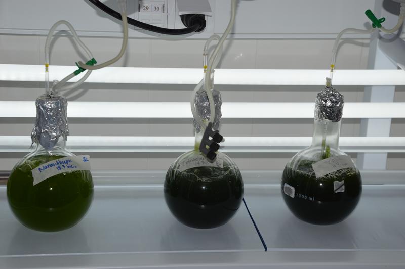 O cruzamento da ciência aos recursos marinhos, está a enaltecer as algas