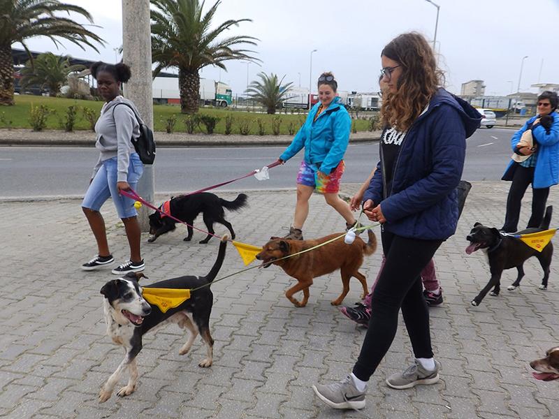 Para os voluntários, passear um cão é um ato de amor