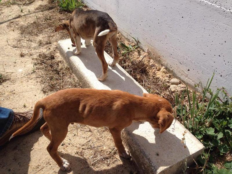 Dois cachorrinhos